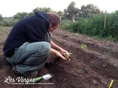 <h5>Jordi</h5><p>En Jordi plantant a l&#039;hort</p>
