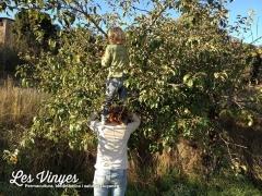 <h5>Collint pome</h5><p>El Nael i l&#039;Ariadna s&#039;enfilen per agafar pomes</p>