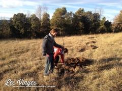 <h5>Plantant arbres</h5><p>Plantant pomeres i pereres al camp nord</p>