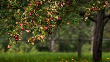 Curs de fruiticultura ecològica