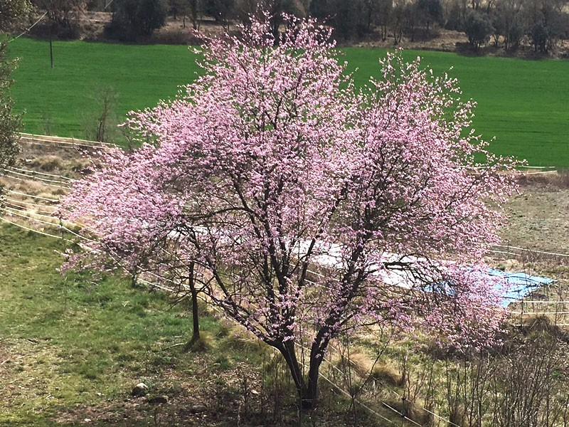Benvingunda primavera