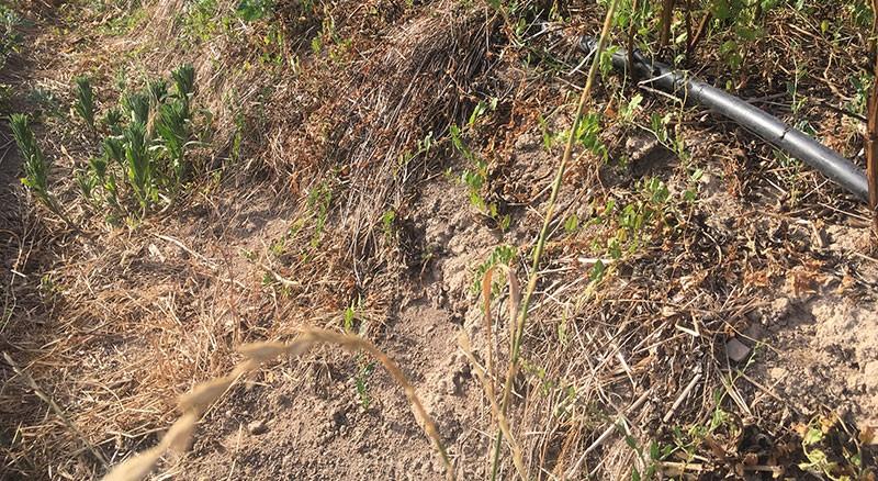 Erosió dels laterals dels huggelkultur