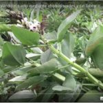 Crear hortes de producció sense llaurar la terra